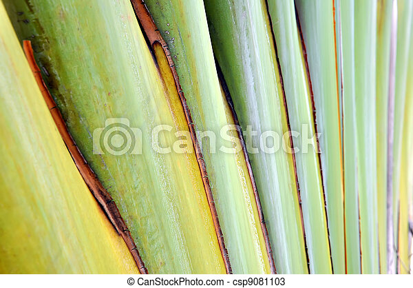 Texture banana - csp9081103