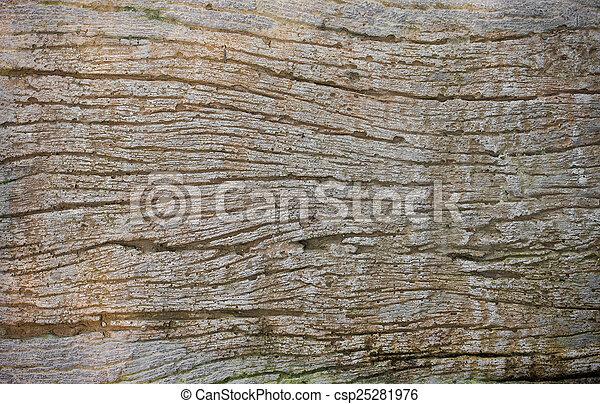 texture bois, fond, texture/wood - csp25281976