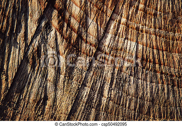 texture detail of cut wood - csp50492095