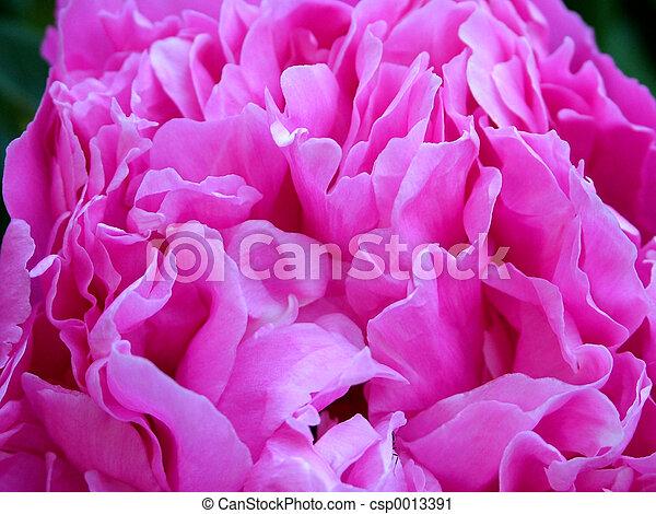 Texture - flower - csp0013391