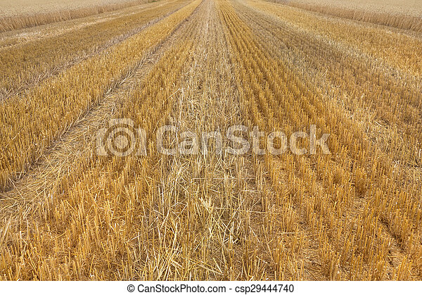 Texture of a stubble field - csp29444740