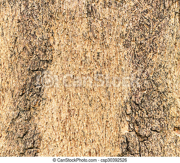 Texture of a wood from tree - csp30392526
