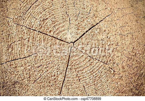 Texture of a wooden log. - csp47708899