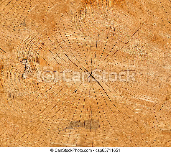 Texture of a wooden slice. Background - csp65711651