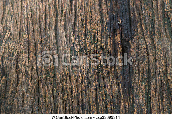 texture of a wooden surface - csp33699314