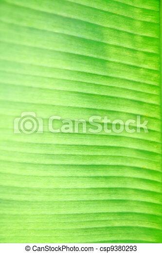 Texture of banana leaf - csp9380293