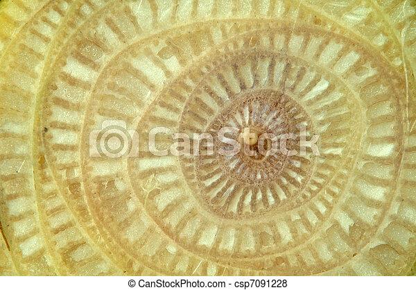 Texture of Banana tree. - csp7091228