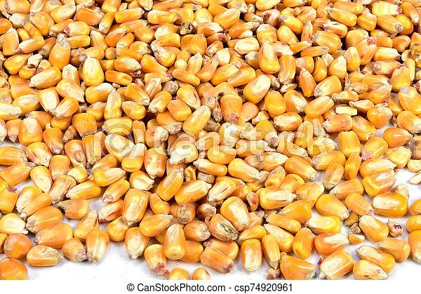 texture of corn - csp74920961