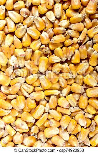 texture of corn - csp74920953