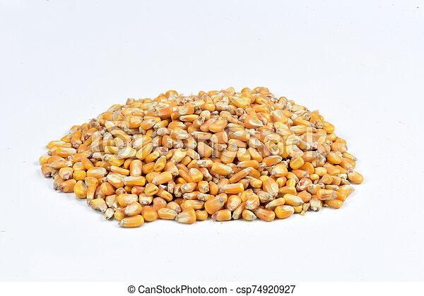 texture of corn - csp74920927