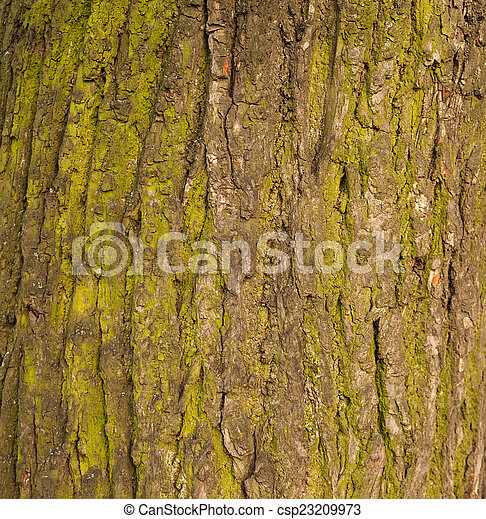Texture of old tree bark covered with green moss - csp23209973