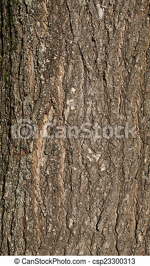 Texture of old tree bark covered with green moss - csp23300313
