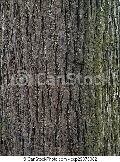 Texture of old tree bark covered with green moss - csp23078082