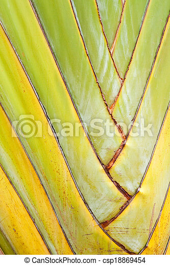 Texture of Traveller's tree or Banana Fan - csp18869454