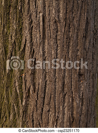 Texture of tree bark covered with green moss - csp23251170