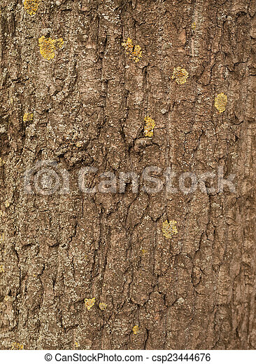 Texture of tree bark covered with green moss - csp23444676