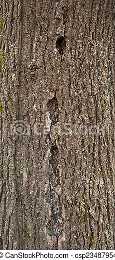 Texture of tree bark covered with green moss - csp23487954