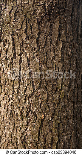 Texture of tree bark covered with green moss - csp23394048