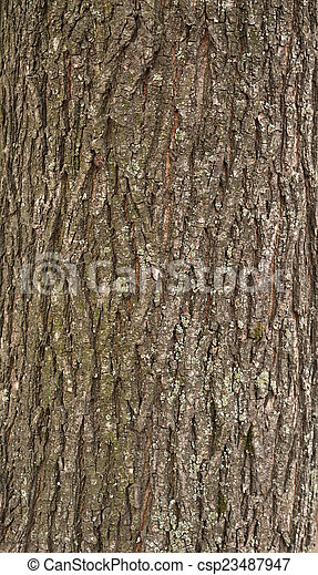 Texture of tree bark covered with green moss - csp23487947