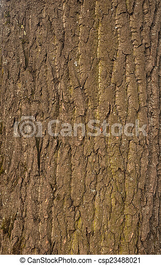Texture of tree bark covered with green moss - csp23488021