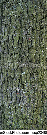 Texture of tree bark covered with green moss - csp23488027