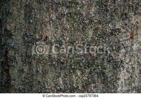 Texture - csp23797364
