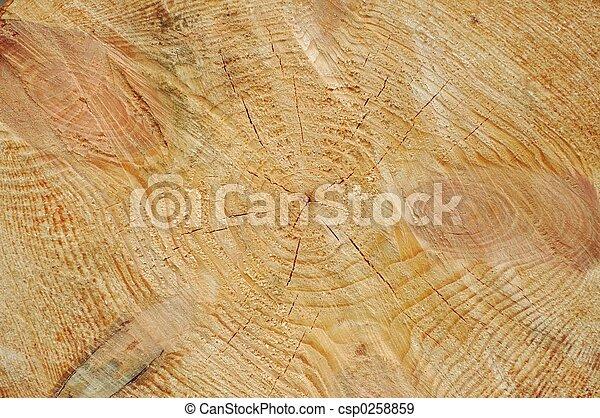 Texture - csp0258859