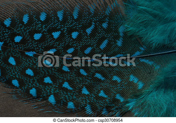 Textured peacock feather close up - csp30708954