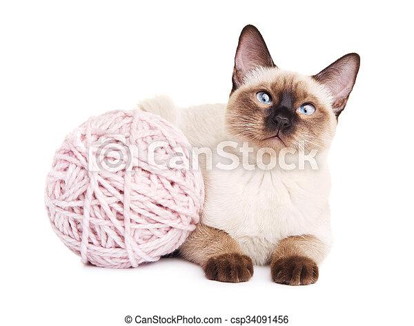 Thai Cat With Woolen Ball - csp34091456