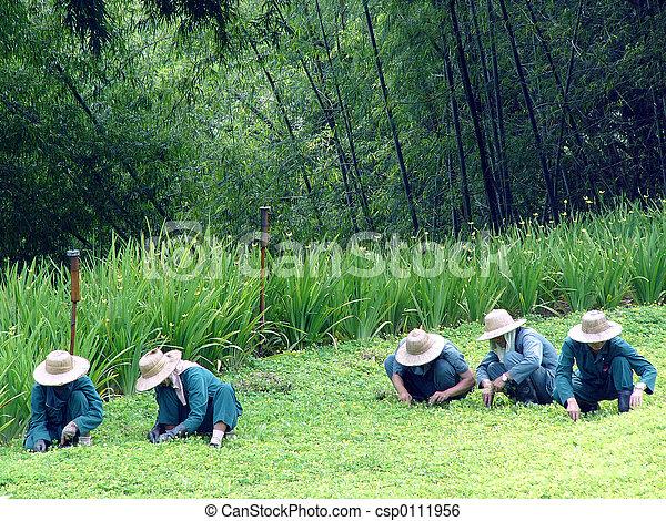 Thai gardeners - csp0111956