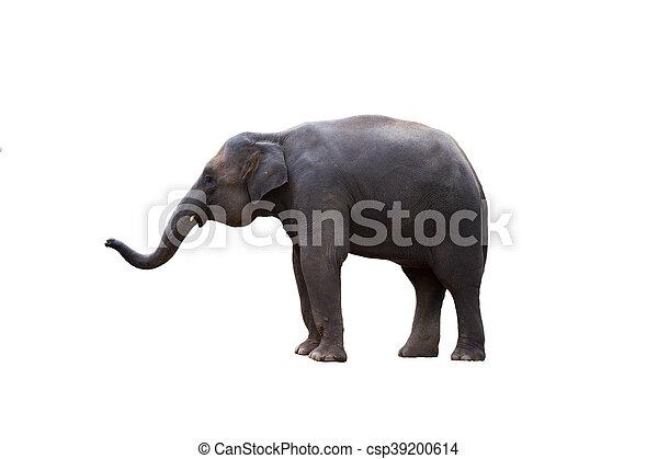 Thailand elephant on white background - csp39200614