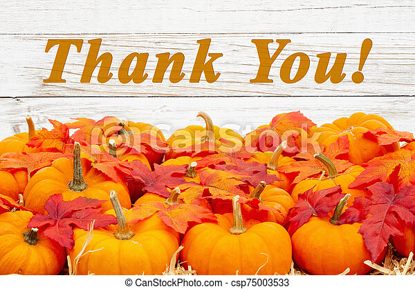Thank you message with orange pumpkins with fall leaves - csp75003533