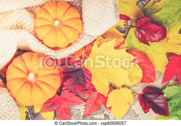 Thanksgiving pumpkins with fall leaves - csp60926057