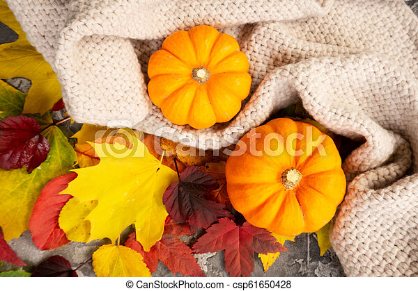 Thanksgiving pumpkins with fall leaves - csp61650428