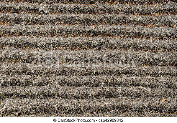 Thatched Roof Background Close Up Of Thatched Roof Texture Of Old Country House Canstock