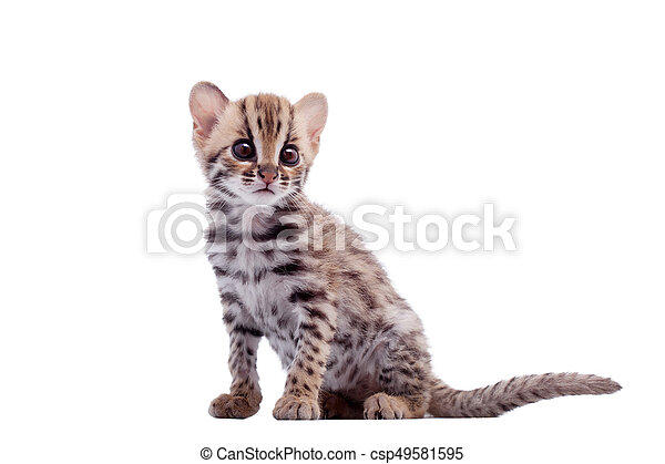 Can pictures of asian leopard good