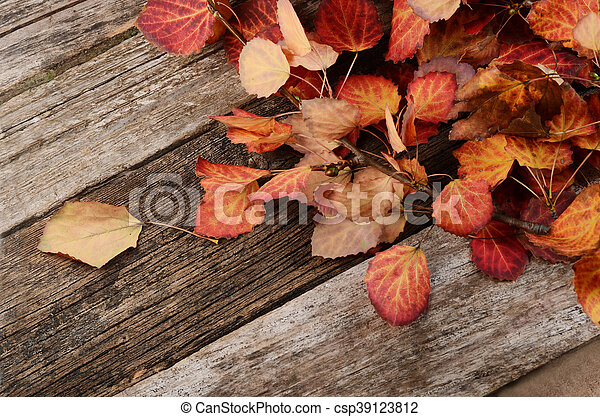 The autumn leaves on wooden background - csp39123812