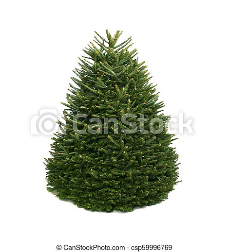 The Bare Christmas Tree Ready To Decorate