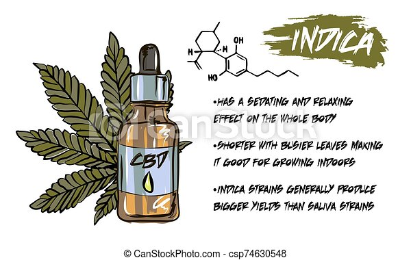 The benefits of CBD oil, medical uses for CBD oil, cannabis indica health benefits infographics - csp74630548
