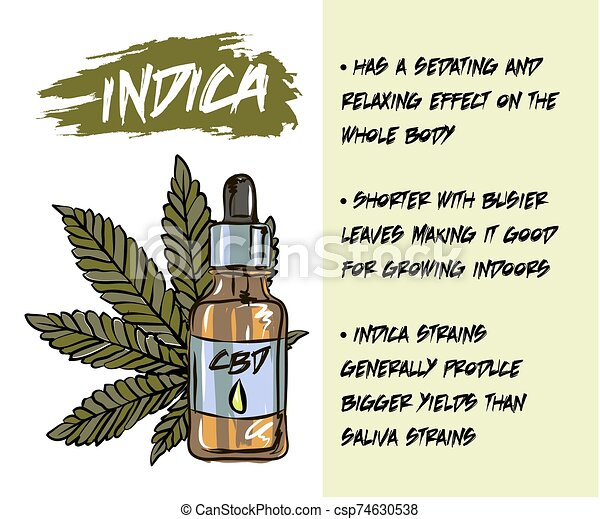 The benefits of CBD oil, medical uses for CBD oil, cannabis indica health benefits infographics - csp74630538