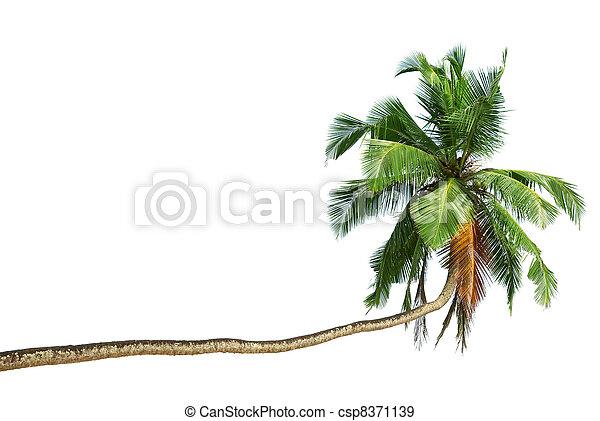 The bent coconut tree - csp8371139
