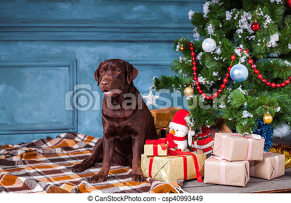 the black labrador retriever sitting with gifts on christmas decorations background csp40993449 - Black Lab Christmas Decor