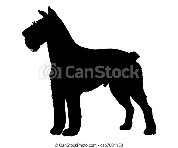 the black silhouette of a german schnauzer vector search clip art rh canstockphoto com schnauzer clipart black and white schnauzer clipart for stone