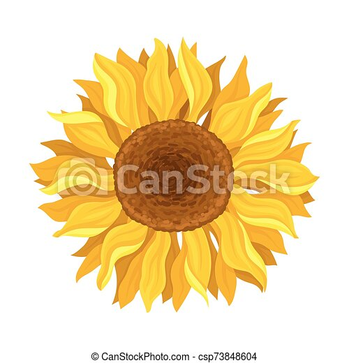 The Blooming Sunflower In The Round Centered Composition Vector Illustration - csp73848604