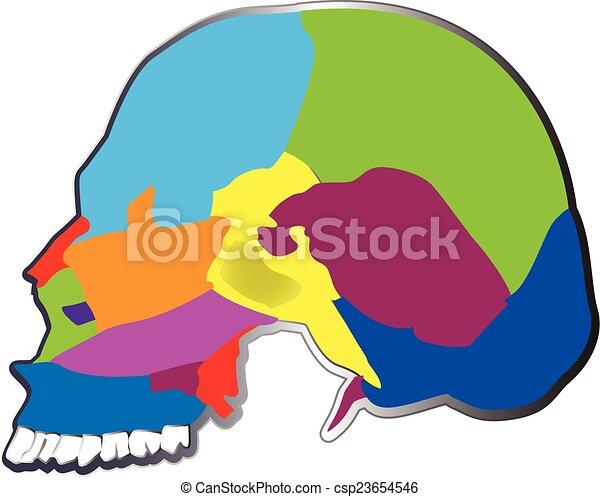 The bones of the human skull logo - csp23654546