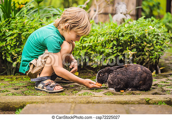 The boy feeds the rabbit. Cosmetics test on rabbit animal. Cruelty free and stop animal abuse concept - csp72225027