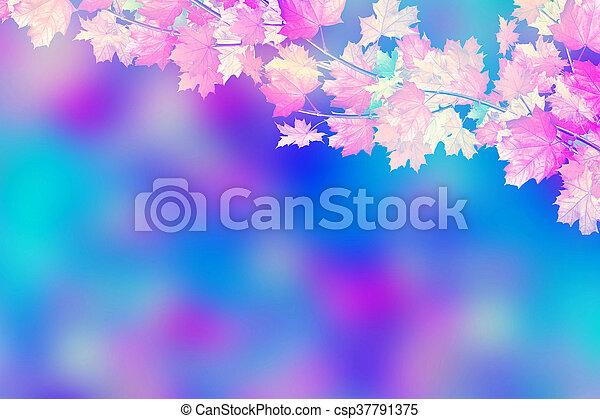 The branch of autumn maple leaves. Golden autumn. - csp37791375
