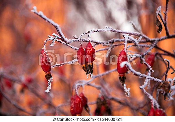 The briar bush covered by the snow - csp44638724