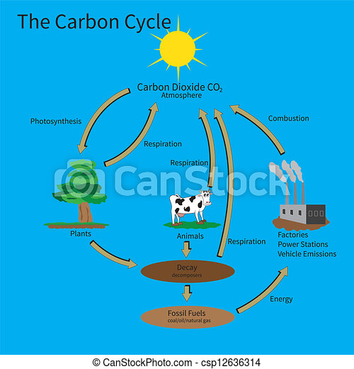 The carbon cycle showing how carbon is recycled in the environment ccuart Images
