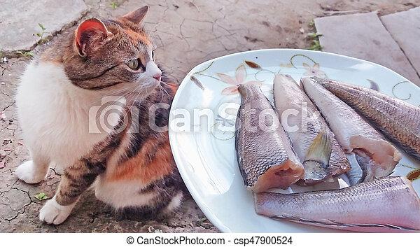 The cat smells fish